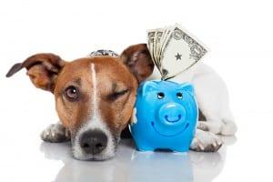 sniff out cash advance loans online